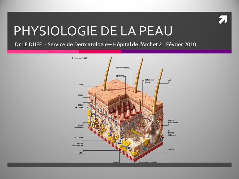 PHYSIOLOGIE DE LA PEAU Dr LE DUFF - Service de Dermatologie – Hôpital de lArchet 2 Février 2010