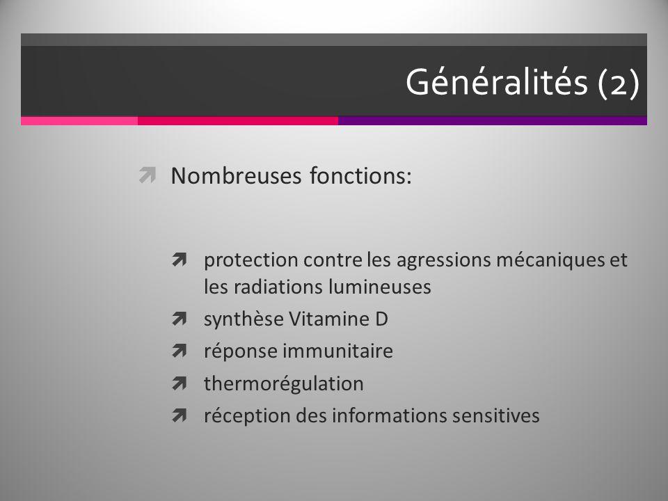 Généralités (2) Nombreuses fonctions: protection contre les agressions mécaniques et les radiations lumineuses synthèse Vitamine D réponse immunitaire thermorégulation réception des informations sensitives