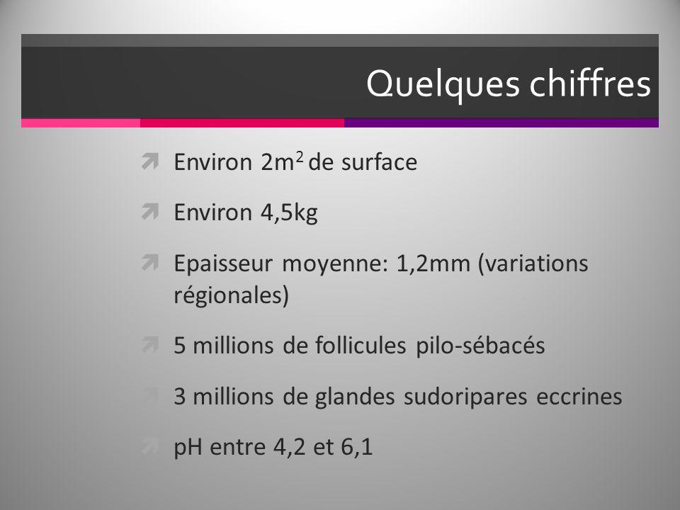 Quelques chiffres Environ 2m 2 de surface Environ 4,5kg Epaisseur moyenne: 1,2mm (variations régionales) 5 millions de follicules pilo-sébacés 3 millions de glandes sudoripares eccrines pH entre 4,2 et 6,1