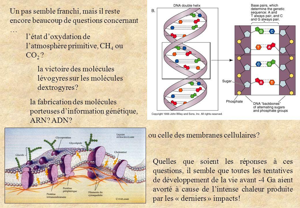 Un pas semble franchi, mais il reste encore beaucoup de questions concernant … la fabrication des molécules porteuses dinformation génétique, ARN? ADN