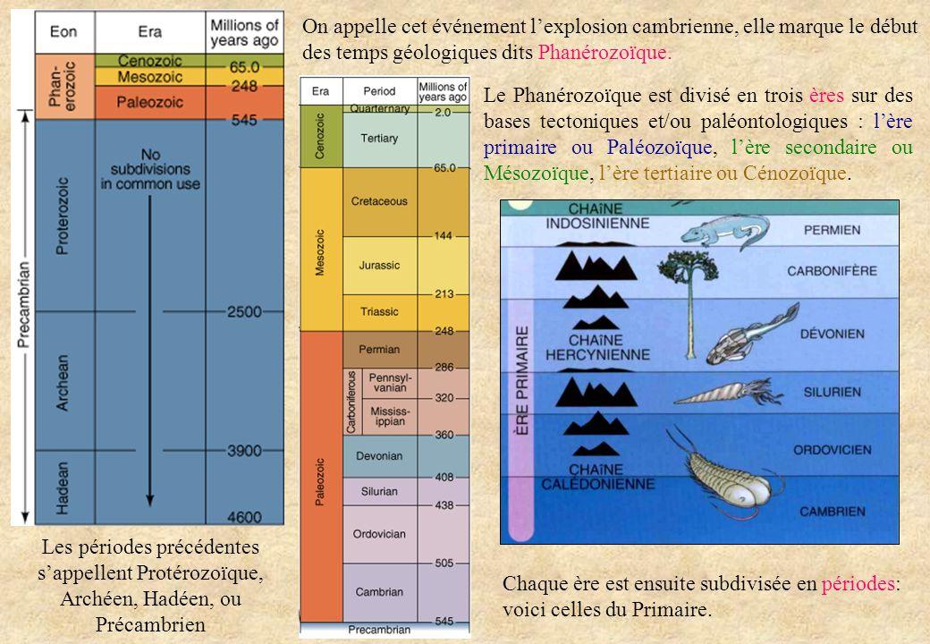On appelle cet événement lexplosion cambrienne, elle marque le début des temps géologiques dits Phanérozoïque. Les périodes précédentes sappellent Pro