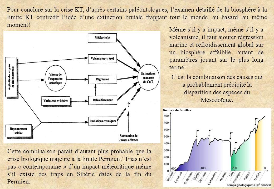 Pour conclure sur la crise KT, daprès certains paléontologues, lexamen détaillé de la biosphère à la limite KT contredit lidée dune extinction brutale