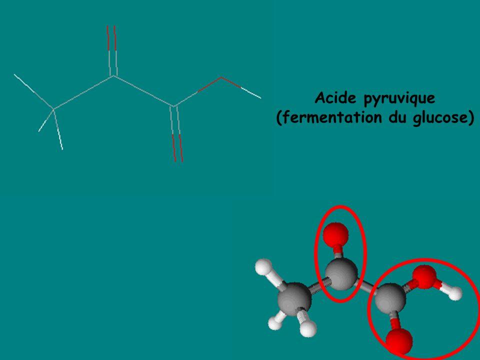 Acide pyruvique (fermentation du glucose)