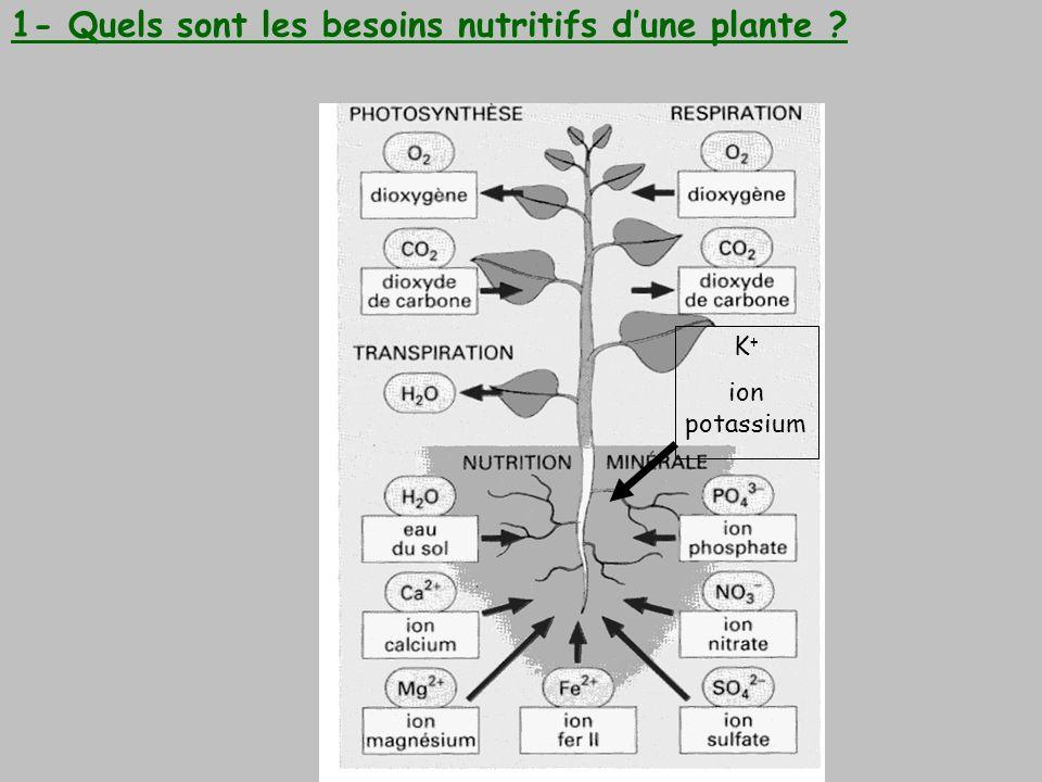 K + ion potassium 1- Quels sont les besoins nutritifs dune plante ?