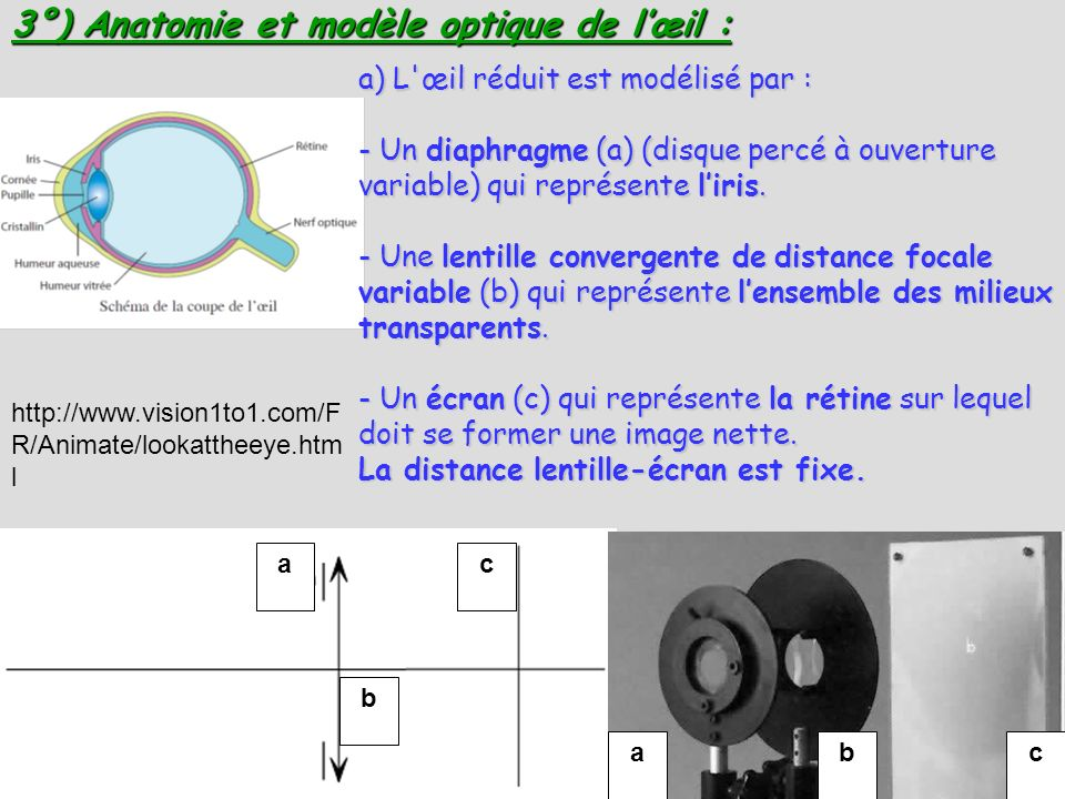 a b c 3°) Anatomie et modèle optique de lœil : abc a) L'œil réduit est modélisé par : - Un diaphragme (a) (disque percé à ouverture variable) qui repr