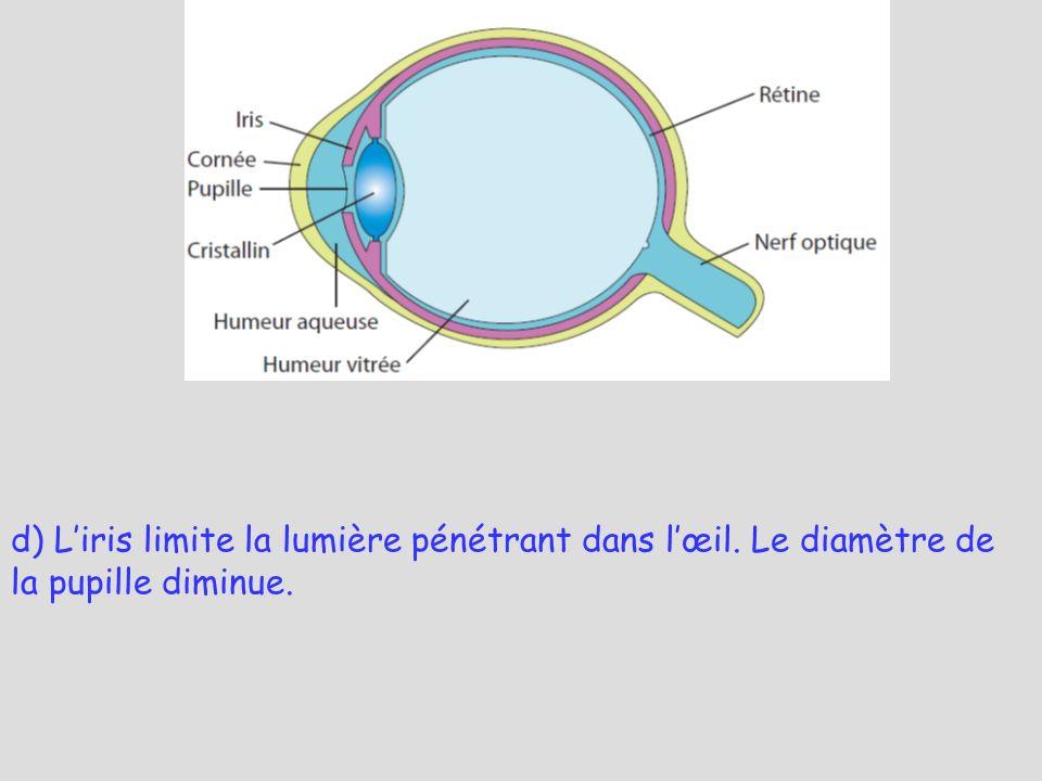 d) Liris limite la lumière pénétrant dans lœil. Le diamètre de la pupille diminue.