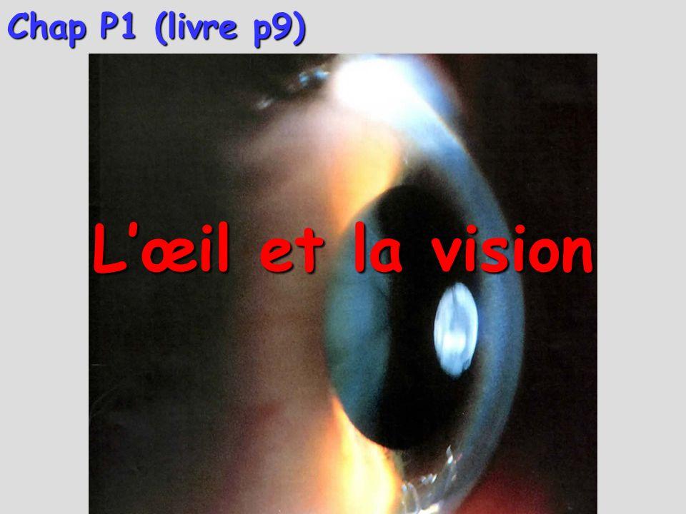 Chap P1 (livre p9) Lœil et la vision I- Lœil réel et le modèle de lœil réduit