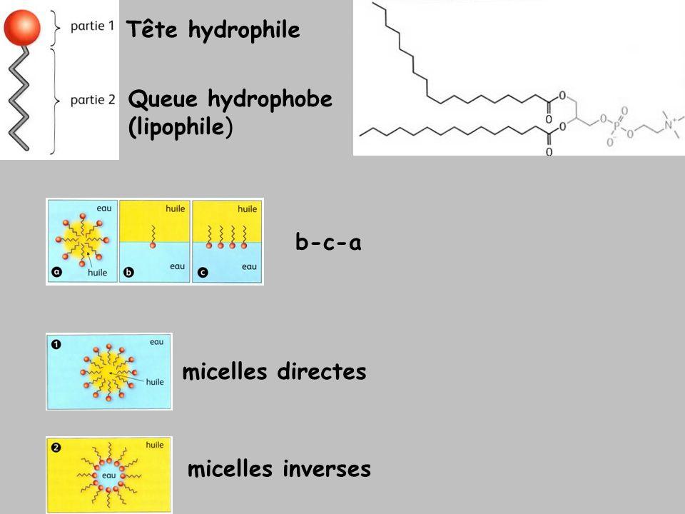 micelles directes micelles inverses b-c-a Tête hydrophile Queue hydrophobe (lipophile)