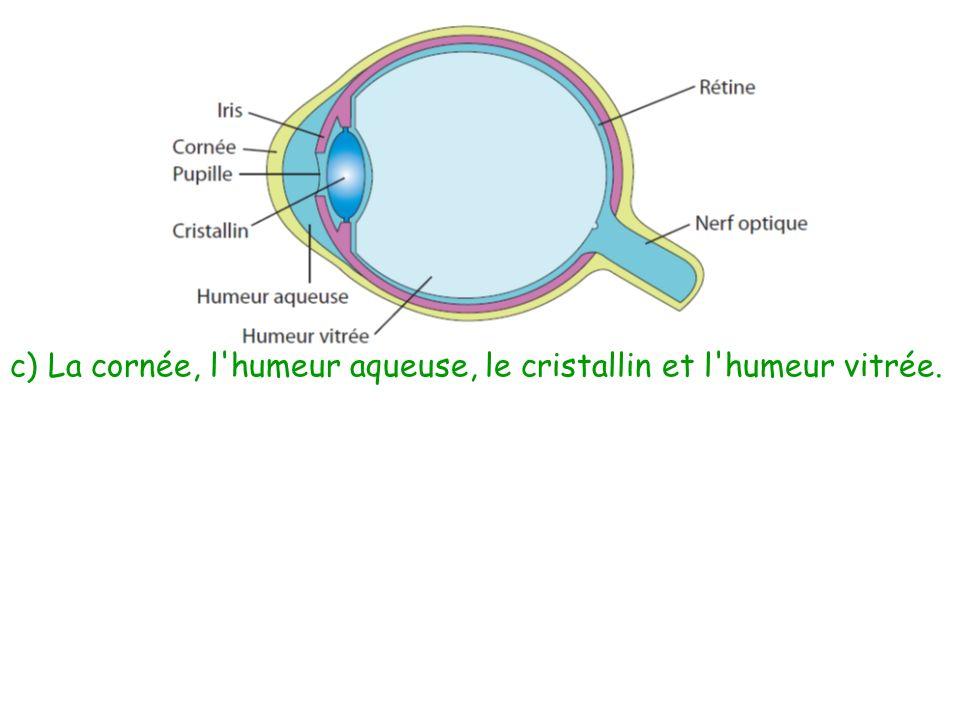 c) La cornée, l'humeur aqueuse, le cristallin et l'humeur vitrée.
