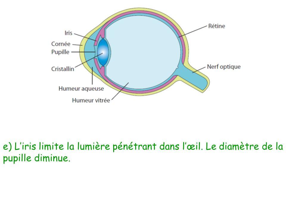 e) Liris limite la lumière pénétrant dans lœil. Le diamètre de la pupille diminue.