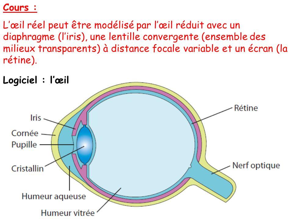 Cours : Lœil réel peut être modélisé par lœil réduit avec un diaphragme (liris), une lentille convergente (ensemble des milieux transparents) à distan