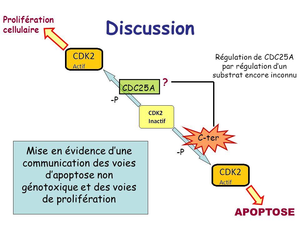 Discussion C-ter -P CDC25A APOPTOSE Prolifération cellulaire Régulation de CDC25A par régulation dun substrat encore inconnu Mise en évidence dune com