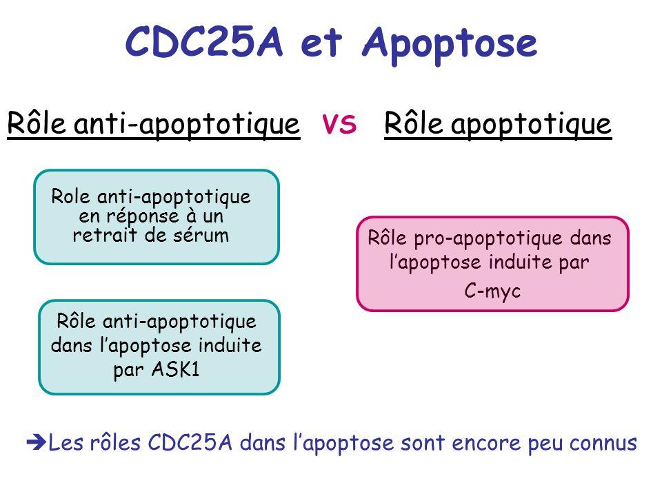 CDC25A et Apoptose Rôle anti-apoptotique dans lapoptose induite par ASK1 Les rôles CDC25A dans lapoptose sont encore peu connus Role anti-apoptotique