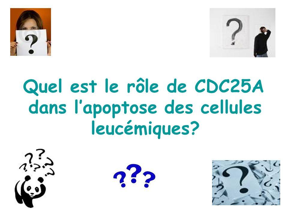 Quel est le rôle de CDC25A dans lapoptose des cellules leucémiques?