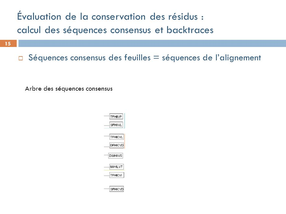 15 Évaluation de la conservation des résidus : calcul des séquences consensus et backtraces Séquences consensus des feuilles = séquences de lalignement Arbre des séquences consensus