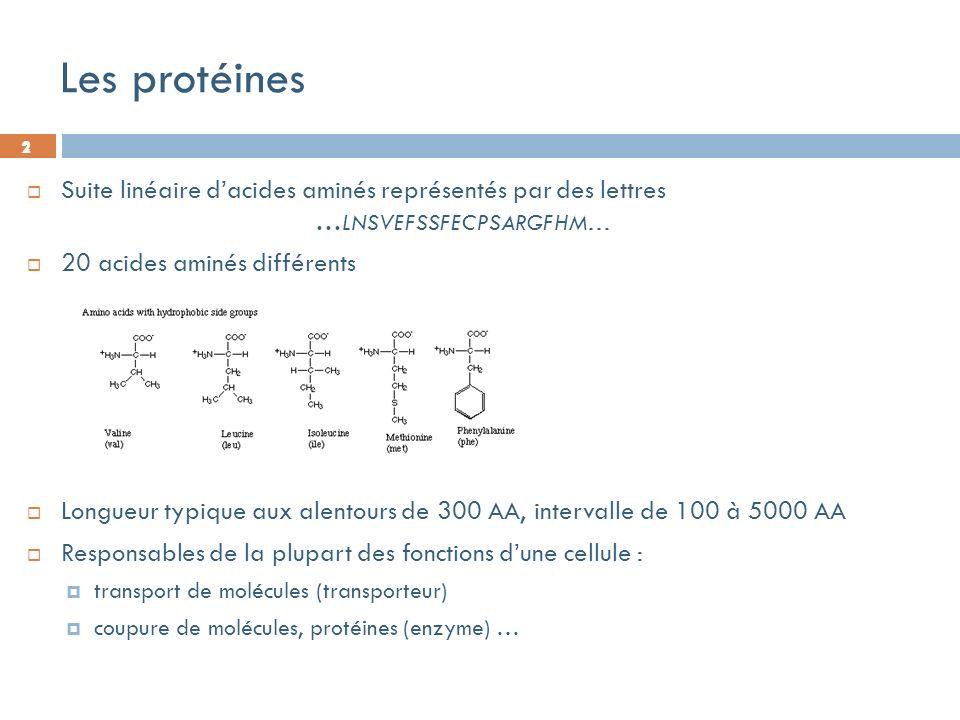 2 Les protéines Suite linéaire dacides aminés représentés par des lettres … LNSVEFSSFECPSARGFHM… 20 acides aminés différents Longueur typique aux alentours de 300 AA, intervalle de 100 à 5000 AA Responsables de la plupart des fonctions dune cellule : transport de molécules (transporteur) coupure de molécules, protéines (enzyme) … 2