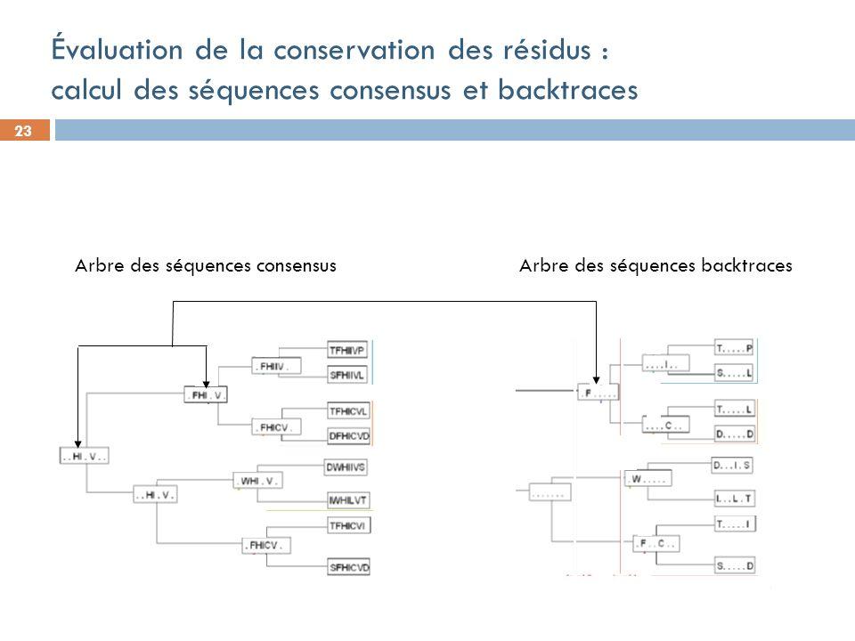 23 Évaluation de la conservation des résidus : calcul des séquences consensus et backtraces Arbre des séquences consensus Arbre des séquences backtraces