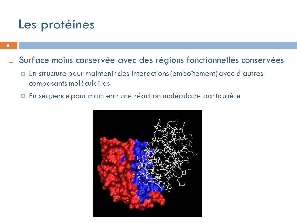 5 Les protéines 5 Surface moins conservée avec des régions fonctionnelles conservées En structure pour maintenir des interactions (emboîtement) avec dautres composants moléculaires En séquence pour maintenir une réaction moléculaire particulière