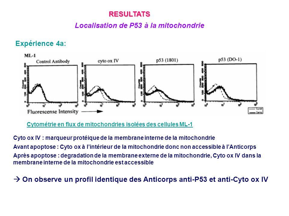 Expérience 4a: Cytométrie en flux de mitochondries isolées des cellules ML-1 Cyto ox IV : marqueur protéique de la membrane interne de la mitochondrie