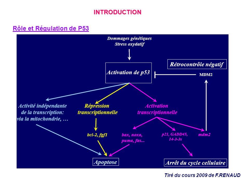 Expérience 3b: La localisation de P53 à la mitochondrie précède lapoptose et nest pas une conséquence de lapoptose Etude de la cinétique de la variation du potentiel de membrane de la mitochondrie Rhodamine 123 : marqueur lipophile sonde du potentiel membranaire Cytométrie en flux Changement de potentiel de membrane après 4h dans les cellules apoptotiques RESULTATS Cinétique de laccumulation de P53 à la mitochondrie