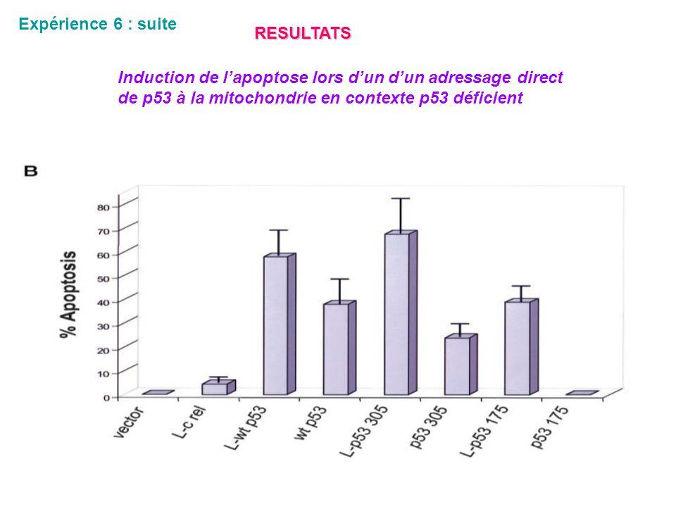Expérience 6 : suite RESULTATS Induction de lapoptose lors dun dun adressage direct de p53 à la mitochondrie en contexte p53 déficient