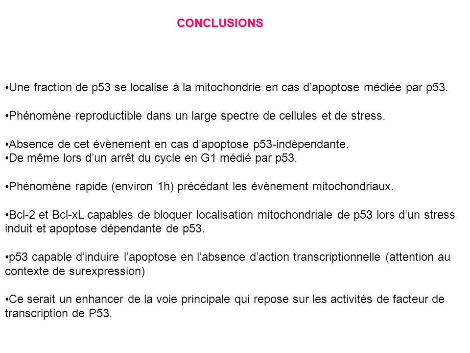 CONCLUSIONS Une fraction de p53 se localise à la mitochondrie en cas dapoptose médiée par p53. Phénomène reproductible dans un large spectre de cellul