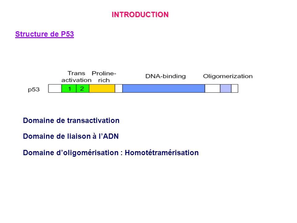 Voie de lapoptose indépendante de P53 INTRODUCTION