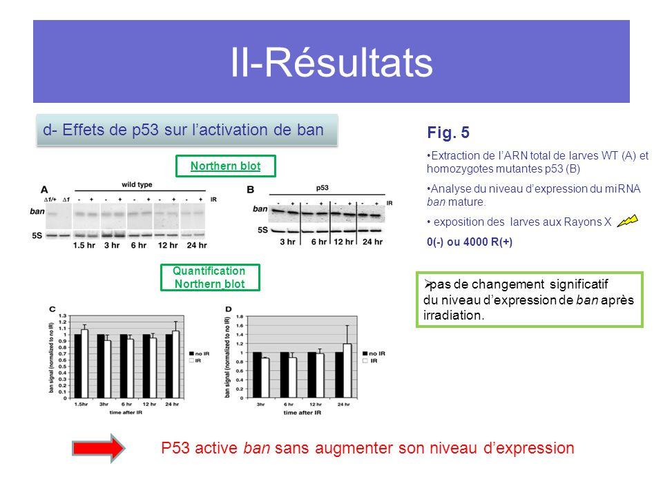 II-Résultats pas de changement significatif du niveau dexpression de ban après irradiation.