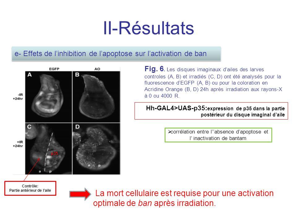 II-Résultats Fig.6.