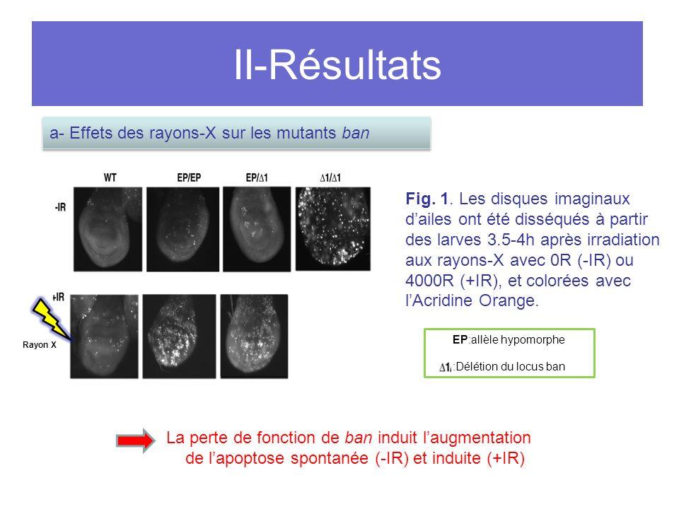 II-Résultats Fig.1.