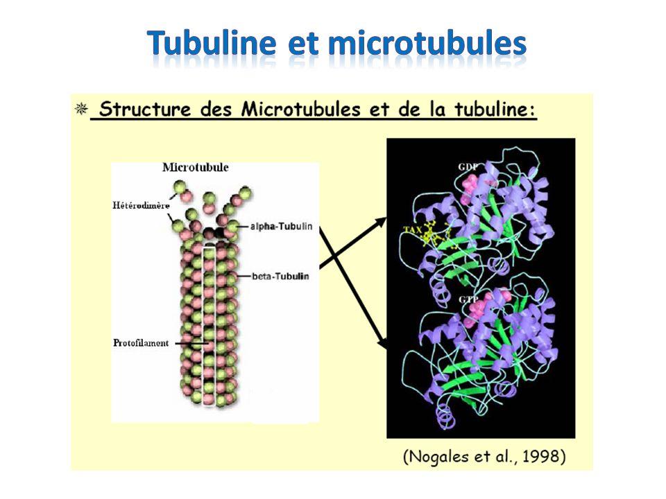 p53 sous sa forme sauvage ou mutante interagit spécifiquement avec la tubuline in vivo