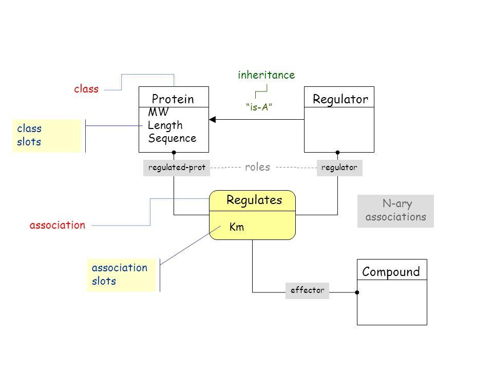Protein class Regulator is-A inheritance Regulates association regulatorregulated-prot roles Km association slots Compound effector N-ary associations MW Length Sequence class slots