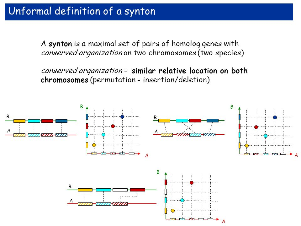 A synton is a maximal set of pairs of homolog genes with conserved organization on two chromosomes (two species) conserved organization = similar relative location on both chromosomes (permutation - insertion/deletion) Unformal definition of a synton A B A B A B B A B A B A