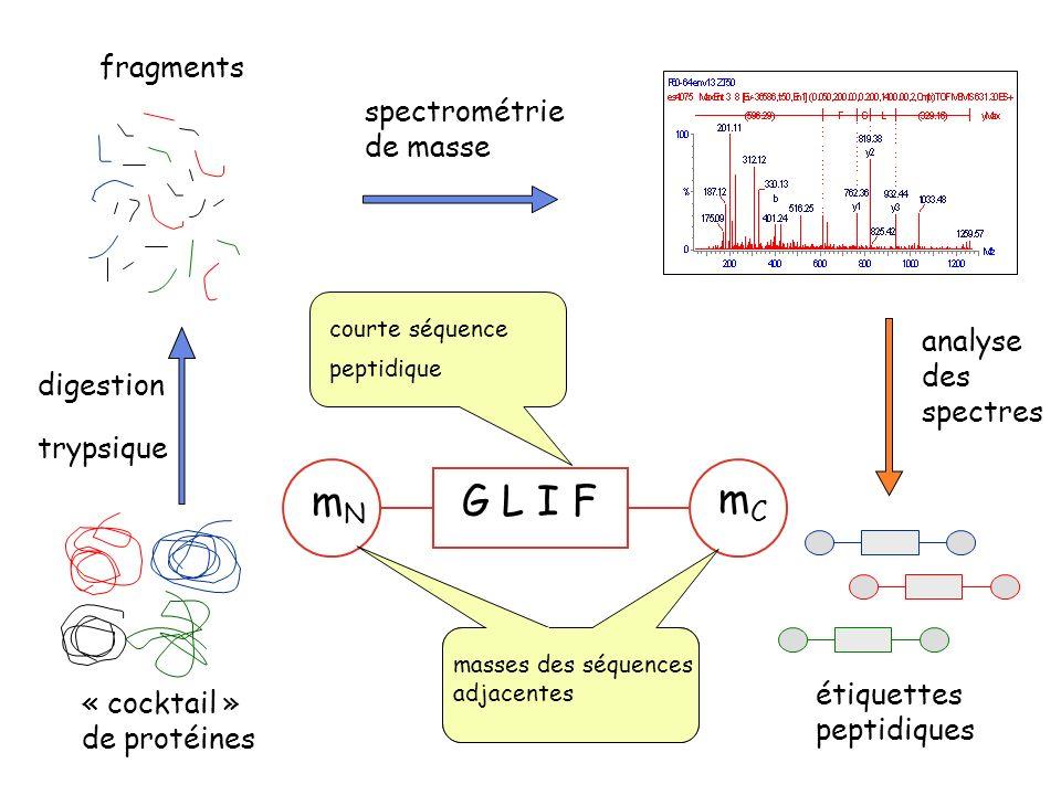 « cocktail » de protéines étiquettes peptidiques fragments spectrométrie de masse analyse des spectres digestion trypsique G L I FmNmN mCmC masses des séquences adjacentes courte séquence peptidique