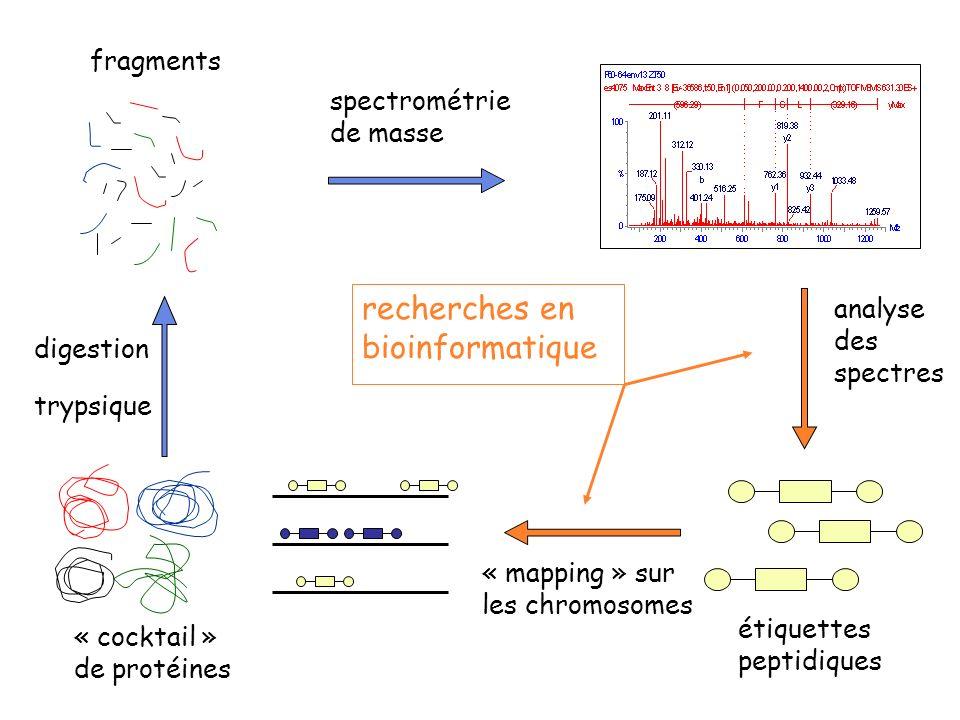 analyse des spectres « cocktail » de protéines étiquettes peptidiques fragments spectrométrie de masse « mapping » sur les chromosomes recherches en bioinformatique digestion trypsique
