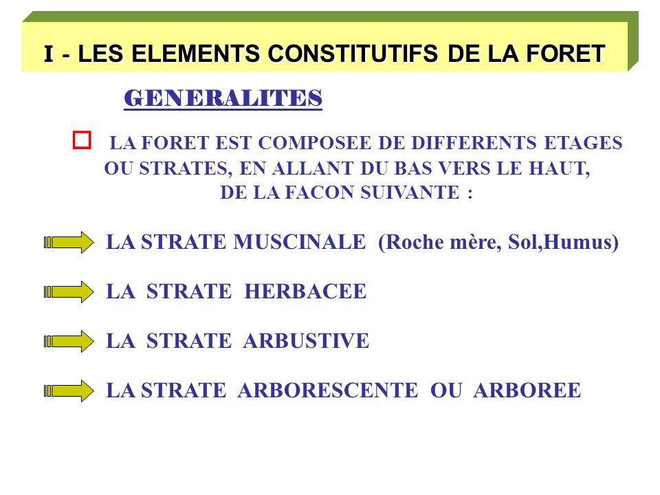 I - LES ELEMENTS CONSTITUTIFS DE LA FORET GENERALITES LA FORET EST COMPOSEE DE DIFFERENTS ETAGES OU STRATES, EN ALLANT DU BAS VERS LE HAUT, DE LA FACON SUIVANTE : LA STRATE MUSCINALE (Roche mère, Sol,Humus) LA STRATE HERBACEE LA STRATE ARBUSTIVE LA STRATE ARBORESCENTE OU ARBOREE