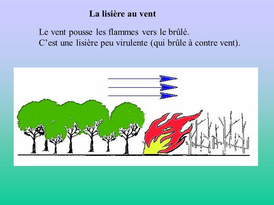 La lisière au vent Le vent pousse les flammes vers le brûlé. Cest une lisière peu virulente (qui brûle à contre vent).