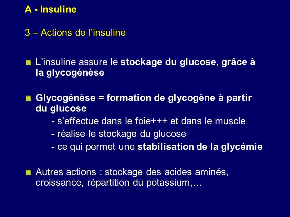 A - Insuline 3 – Actions de linsuline Linsuline assure le stockage du glucose, grâce à la glycogénèse Glycogénèse = formation de glycogène à partir du