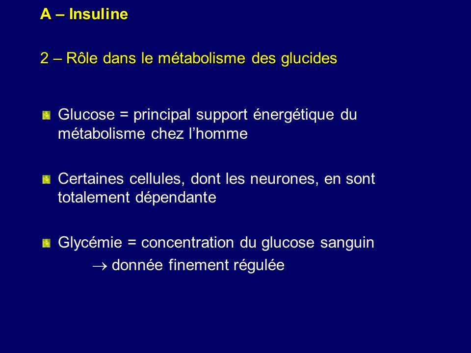 A – Insuline 2 – Rôle dans le métabolisme des glucides Glucose = principal support énergétique du métabolisme chez lhomme Certaines cellules, dont les