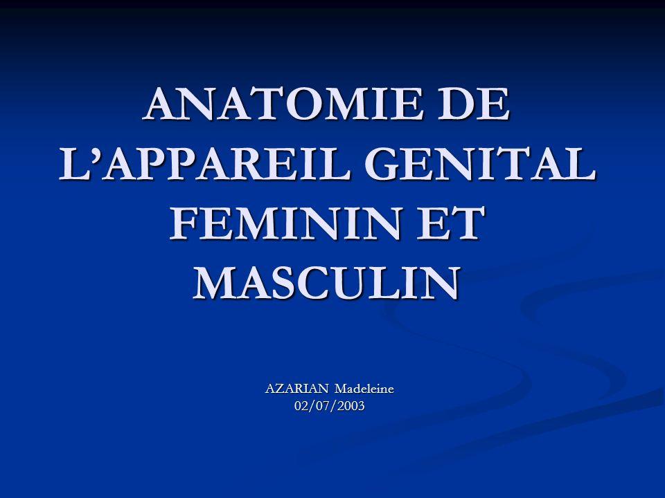 ANATOMIE DE LAPPAREIL GENITAL FEMININ ET MASCULIN AZARIAN Madeleine 02/07/2003