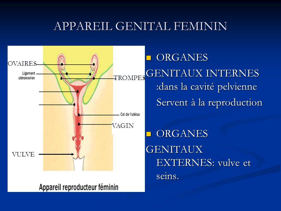 APPAREIL GENITAL FEMININ ORGANES GENITAUX INTERNES :dans la cavité pelvienne Servent à la reproduction ORGANES GENITAUX EXTERNES: vulve et seins. VULV