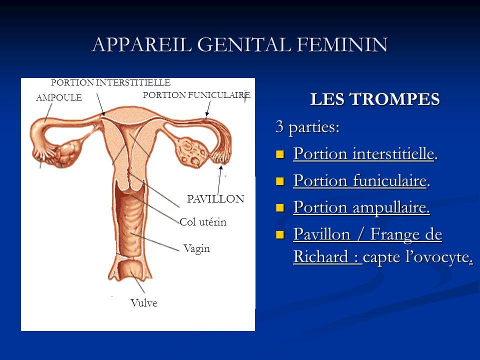 APPAREIL GENITAL FEMININ LES TROMPES 3 parties: Portion interstitielle. Portion funiculaire. Portion ampullaire. Pavillon / Frange de Richard : capte