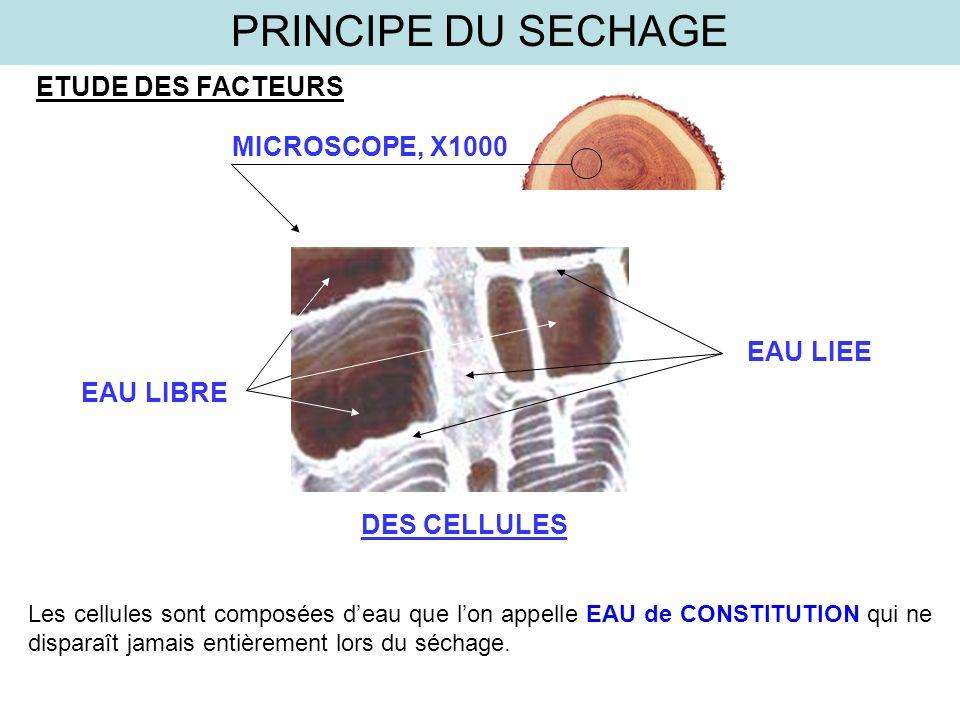 ETUDE DES FACTEURS MICROSCOPE, X1000 DES CELLULES EAU LIBRE EAU LIEE PRINCIPE DU SECHAGE Les cellules sont composées deau que lon appelle EAU de CONST
