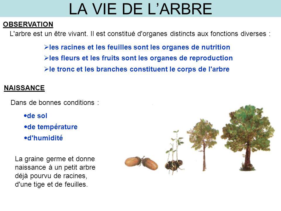 LA VIE DE LARBRE OBSERVATION L'arbre est un être vivant. Il est constitué d'organes distincts aux fonctions diverses : les racines et les feuilles son