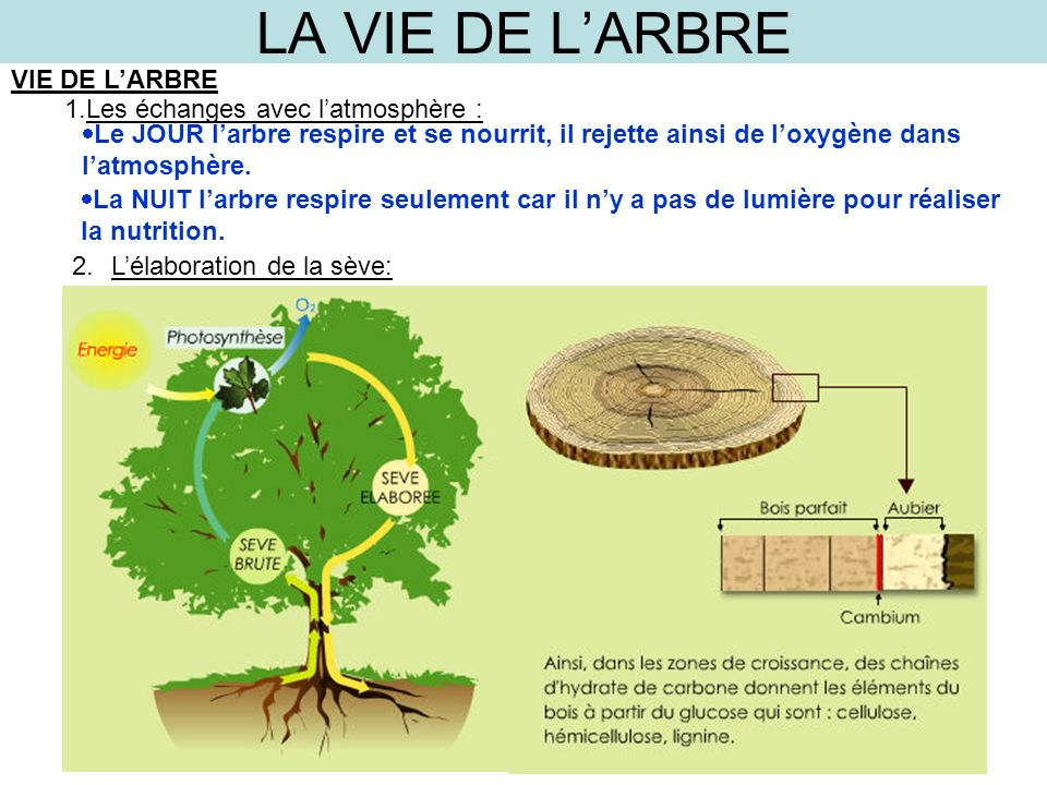 LA VIE DE LARBRE VIE DE LARBRE 1.Les échanges avec latmosphère : Le JOUR larbre respire et se nourrit, il rejette ainsi de loxygène dans latmosphère.