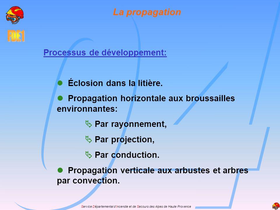Service Départemental dIncendie et de Secours des Alpes de Haute Provence Processus de développement: Éclosion dans la litière. Propagation horizontal