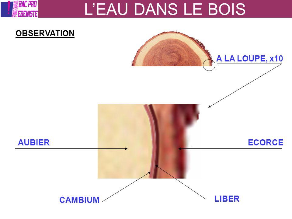 LEAU DANS LE BOIS OBSERVATION AU MICROSCOPE, X1000 DES CELLULES EAU LIBRE EAU LIEE Les cellules sont composées deau que lon appelle : EAU de CONSTITUTION