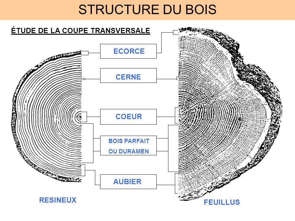 STRUCTURE DU BOIS ÉTUDE DE LA COUPE TRANSVERSALE ECORCE AUBIER COEUR CERNE BOIS PARFAIT OU DURAMEN RESINEUX FEUILLUS
