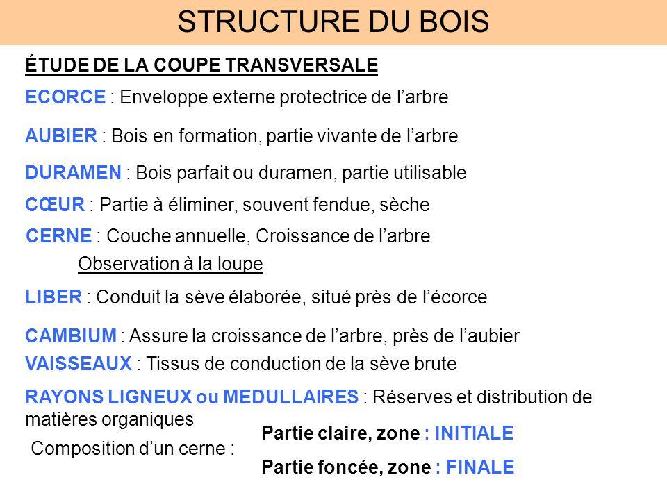 STRUCTURE DU BOIS ÉTUDE DE LA COUPE TRANSVERSALE ECORCE : Enveloppe externe protectrice de larbre AUBIER : Bois en formation, partie vivante de larbre
