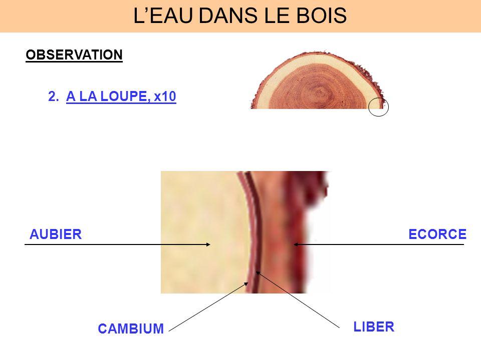 OBSERVATION 3.AU MICROSCOPE, X1000 DES CELLULES EAU LIBRE EAU LIEE Les cellules sont composées deau que lon appelle : EAU de CONSTITUTION LEAU DANS LE BOIS
